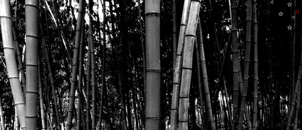 Bamboo Forest by Derek Delacroix