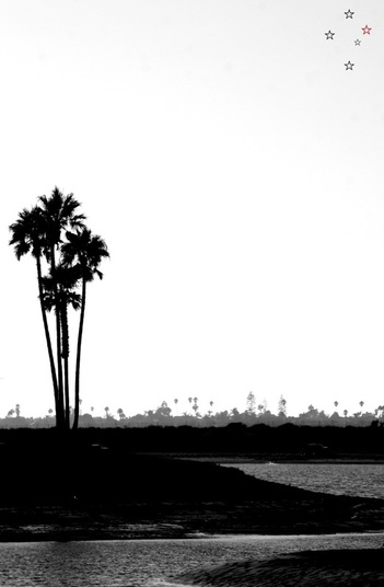 San Diego Palm Trees