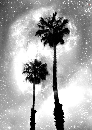 Palm Tree Galaxy