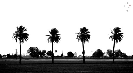 Palm Trees Four