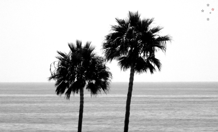 Palm Trees in Black & White