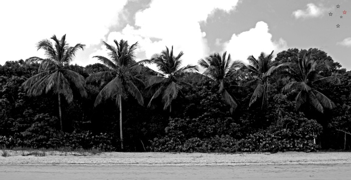 Palm Trees Virgin Islands